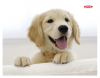 Ednet Mouse Pad With Dog ED64220