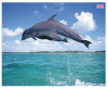 Ednet Mouse Pad With Dolfins ED64220