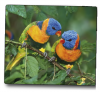 Ednet Mouse Pad With Birds ED64220